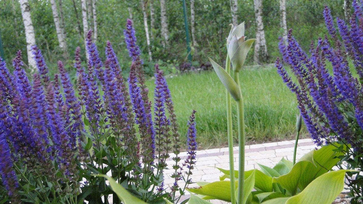 Ogród w Miłoszycach