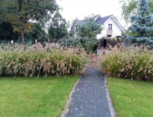 Ogród cienisty w Smolcu