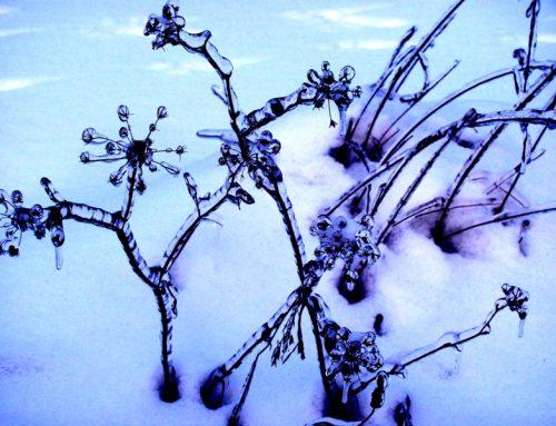 Ogród zimą.