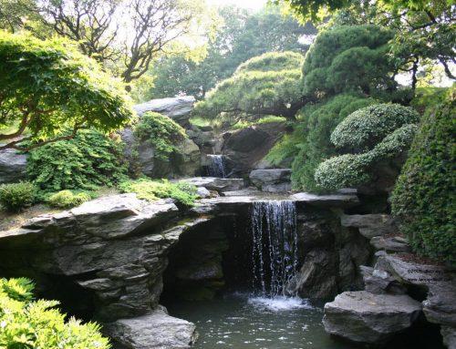 Ogród wodny, słoneczny czy cienisty?