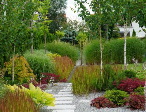 Geometryczny ogród traw, Wysoka