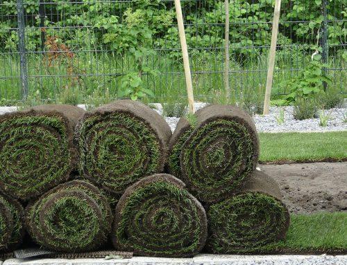 Jak założyć trawnik z rolki? Poradnik krok po kroku.